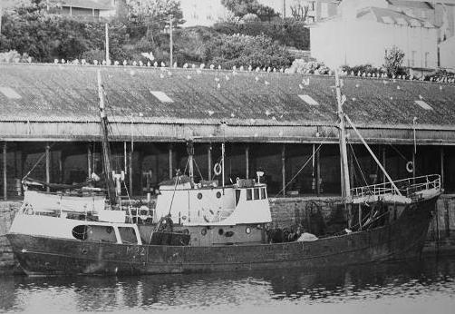 Picton Sea Lion